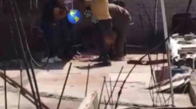 Familia golpea a un perro hasta causarle la muerte