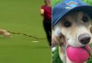 Una perrita interrumpió un juego de cricket y los comentaristas no dejaban de reir