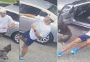 Un perrito golpeó a un señor que lo engañó al lanzar un palo (VIDEO)