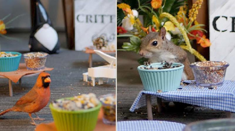 """Una pareja se les ocurrió crear un """"mini café"""" para los animales de su vecindario y se volvió viral"""