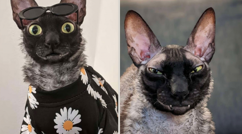 Un gatito nunca deja de sonreír y eso cautivó a miles de internautas