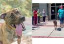 El perro con más tiempo del refugio por fin es adoptado y es despedido de forma honorable