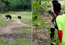 Dos osos salvajes empezaron a jugar con una pelota de fútbol que le arrebataron a un grupo de niños