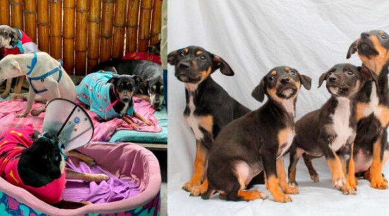 14 cachorros buscan un nuevo hogar tras la muerte de su dueño