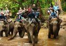 78 Elefantes que eran utilizados para transportar a turistas durante 40 años  fueron finalmente liberados